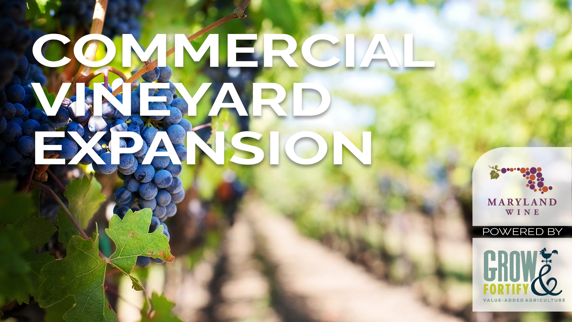 Commercial Vineyard Expansion Course